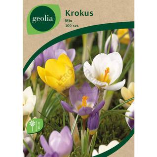 Krokus botaniczny MIX GEOLIA
