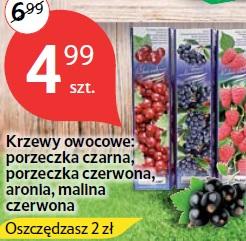 Krzewy owocowe: porzeczka czarna, porzeczka czerwona, aronia, malina czerwona