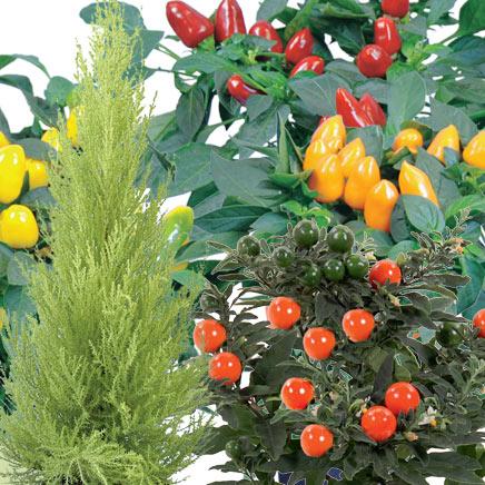 Rośliny dekoracyjne - różne gatunki