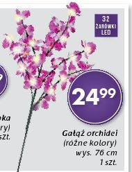 Gałąź orchidei (różne kolory) wys. 76 cm