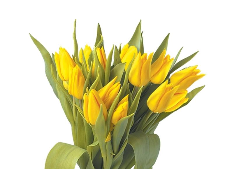 Tulipany 5 szt.