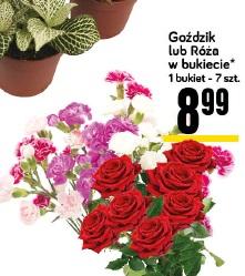 Goździk lub Róża w bukiecie