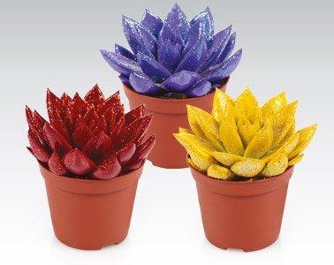 Kwiaty Sukulenty
