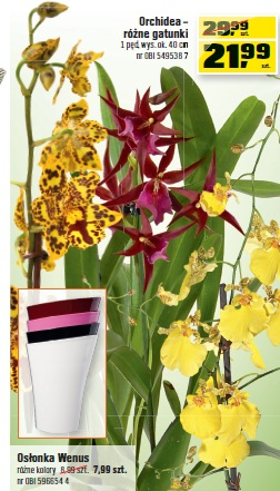 Orchidea – różne gatunki