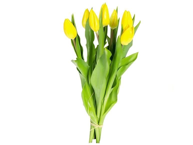 Tulipany 7 szt.