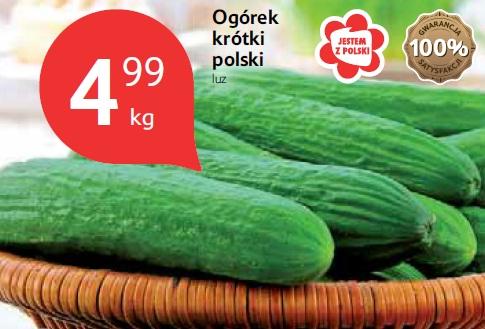 Ogórek krótki polski