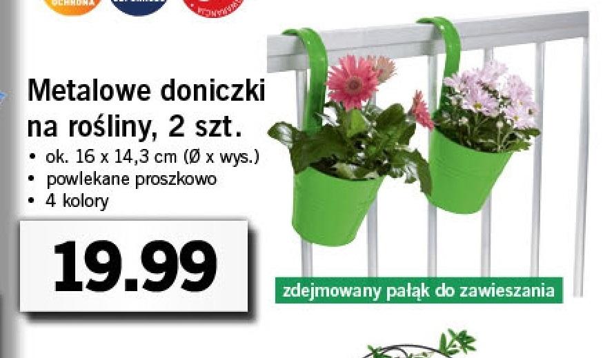 Archiwum Doniczki Lidl 27 02 2017 27 02 2017
