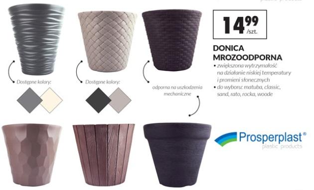Archiwum Donica Mrozoodporna Biedronka 11 04 2018 24