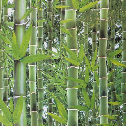 Archiwum Tapeta Winylowa Do Kuchni I łazienek Bambus Obi